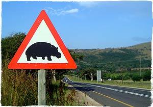 Hippo Crossing