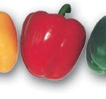 Pepper Profile: Bell Peppers