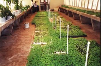 Seedlings in a Screenhouse