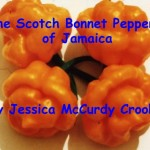 The Scotch Bonnet Peppers of Jamaica