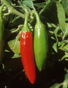 Red and Green Serranos