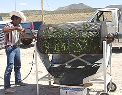 Addictive Aroma: Roasting Green Chiles in Hatch, New Mexico