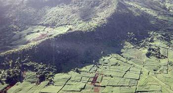Sugar Cane Fields of Mauritius