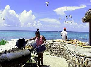 Barbecue Gulls