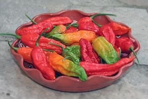 Colorful Naga Harvest