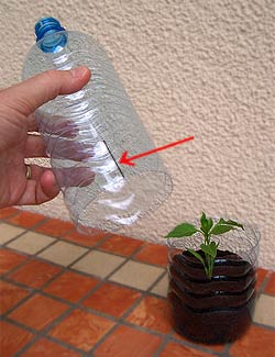 Mini Greenhouse in a Bottle