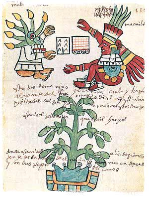 Representation of a cacao plant in an Aztec codex