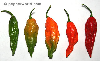 Bhut Color Change