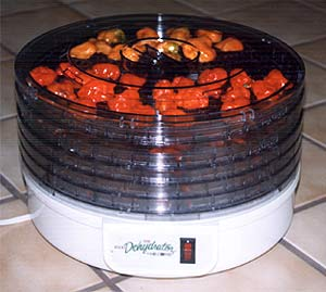 Drying chiles in a dehydrator
