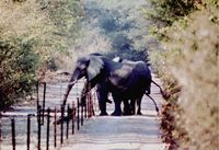 Anti-Elephant Pepper Fence