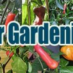 Pepper Gardening 101
