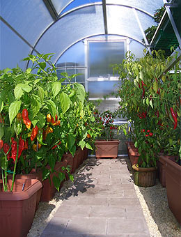Pepperworld Test Greenhouse