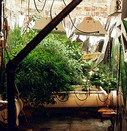 Willard's Hydroponic Greenhouse