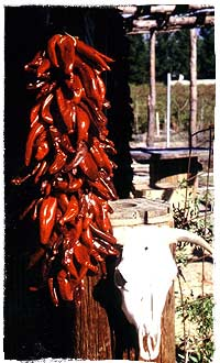 Ristra with Red New Mexican Chiles, fresh