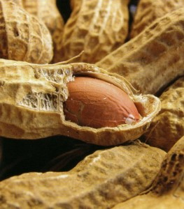 A Peanut is Not a Nut