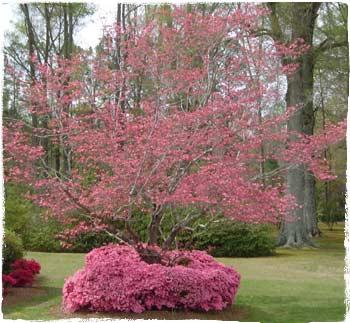 NC Spring
