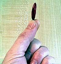 Small-podded Piri-Piri