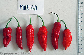 Morich Pods