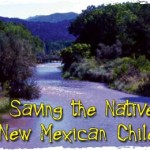 Embudo, N.M.: Saving the Native New Mexican Chiles