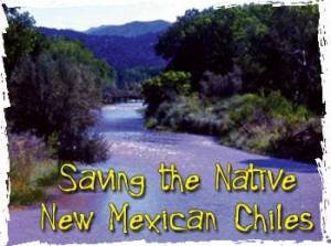 Saving the Native New Mexican Chiles