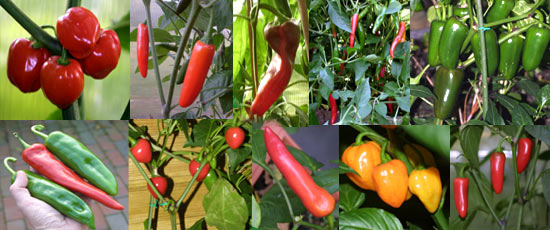 Chile Pepper Varieties