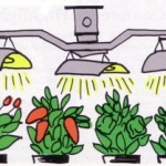 Growing Peppers Under Artificial Light