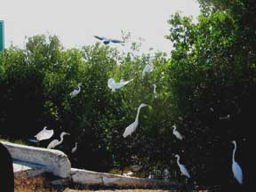 Birds by the road to Progreso