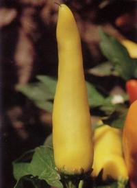 'Hungarian Yellow Wax Hot'