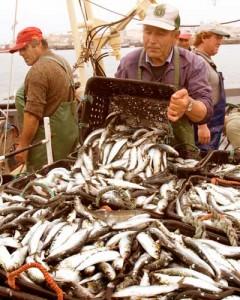 Sardine Fishing in Portugal