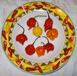 Trinidad Scorpions on a pepper plate.
