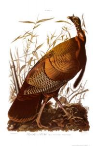 Audubon's American Turkey
