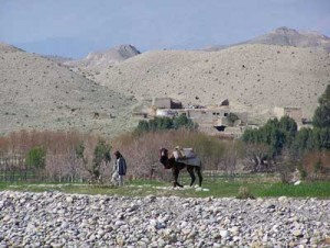 A camel in front of a typical Afghan farm.