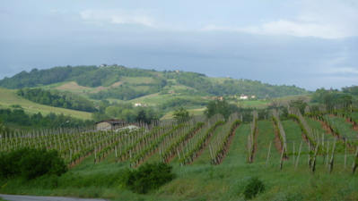 Lombardy Vineyards