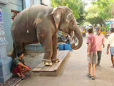 A temple elephant greets visitors
