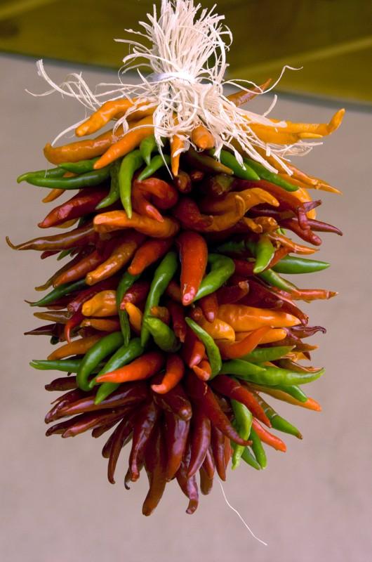Multicolor Ristra
