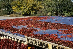 Chiles Drying on Roof