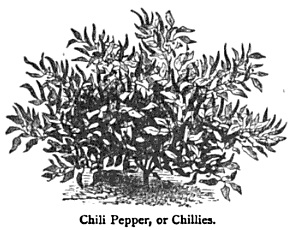 Chili Peppers, 1885
