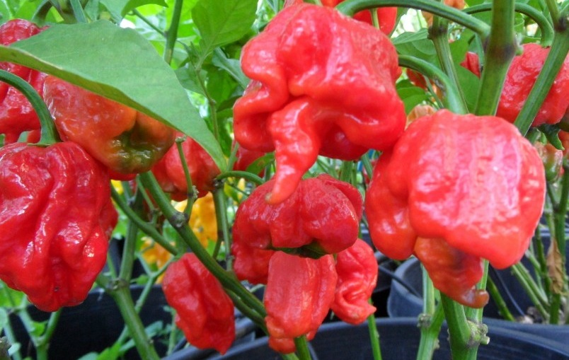 Trinidad Scorpion Group
