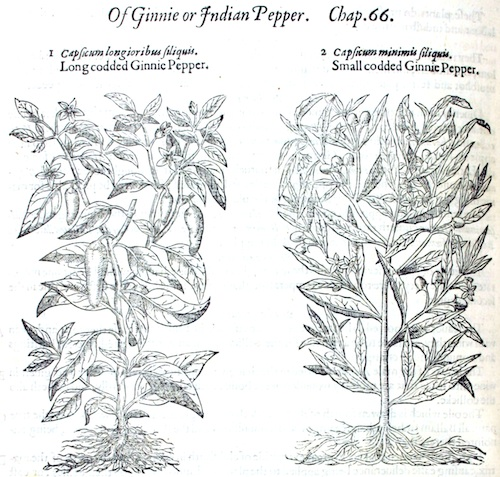 Ginnie Peppers from Gerard's Herbal