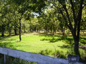 Pecan Grove, Las Cruces