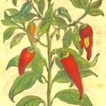 Observations on Paprika, 1844-1897