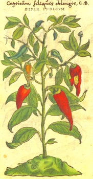 Paprika in an Old Herbal