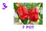 7-Pot