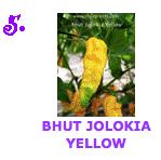 Bhut Jolokia Yellow