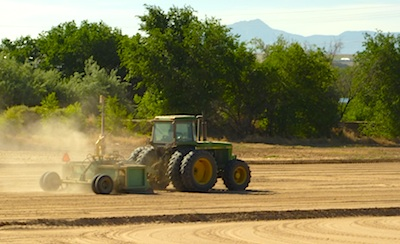 Laser-Leveling for an Alfalfa Field