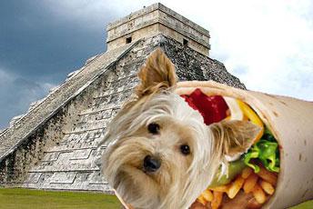 burrito-dog