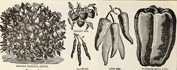 Peppers-Page-in-Livingston-Seed-Catalog-1893_small