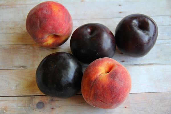 Plum and peach ambrosia (600x400)