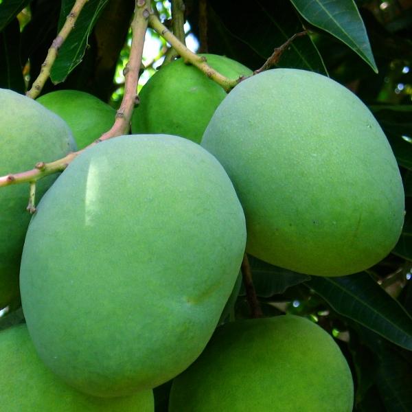 green mango salsa
