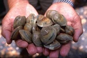 smoked-clams